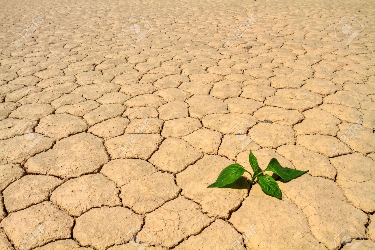 Fresh green vegetable coming to life on cracked desert ground Stock Photo - 7044639