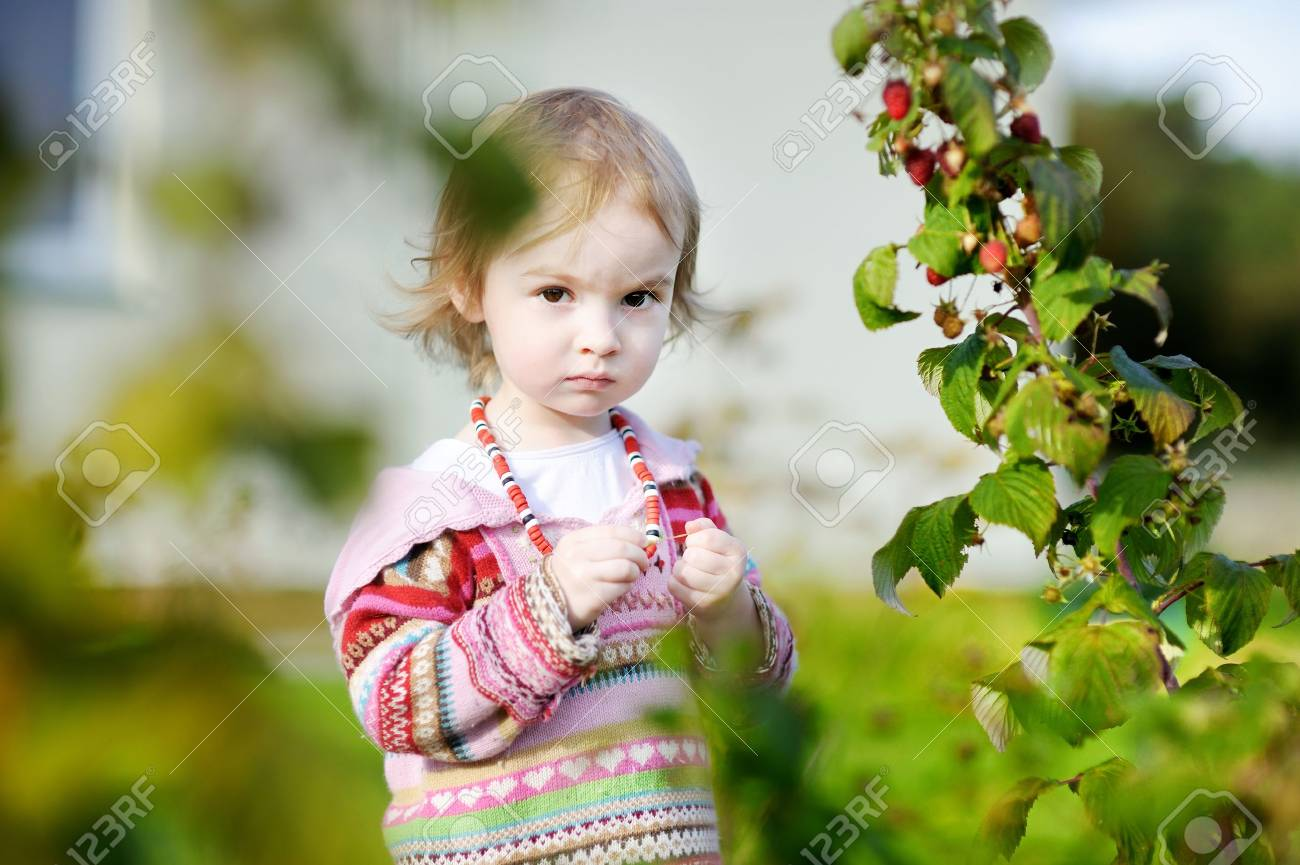 Adorable toddler girl picking raspberries in a garden Stock Photo - 12791866