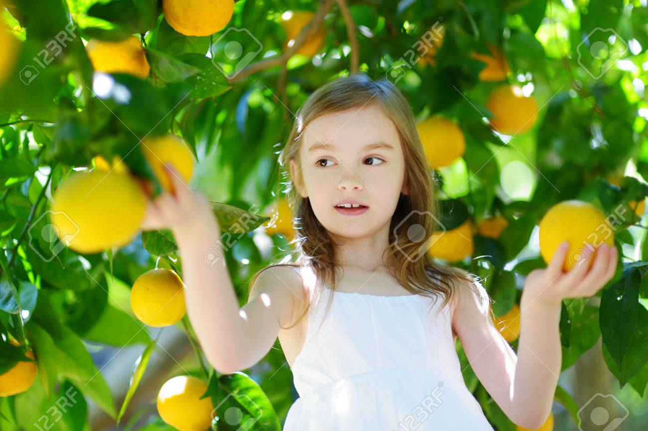 Unique Adorable Little Girl Picking Fresh Ripe Oranges In Sunny Orange  With Fair Adorable Little Girl Picking Fresh Ripe Oranges In Sunny Orange Tree Garden  In Italy Stock Photo With Lovely Free Appetizer Olive Garden Also Garden Storage Boxes Uk In Addition Ackworth Garden Centre And Disinfecting Garden Tools As Well As Small Decked Gardens Additionally Afternoon Tea Kensington Gardens From Rfcom With   Fair Adorable Little Girl Picking Fresh Ripe Oranges In Sunny Orange  With Lovely Adorable Little Girl Picking Fresh Ripe Oranges In Sunny Orange Tree Garden  In Italy Stock Photo And Unique Free Appetizer Olive Garden Also Garden Storage Boxes Uk In Addition Ackworth Garden Centre From Rfcom