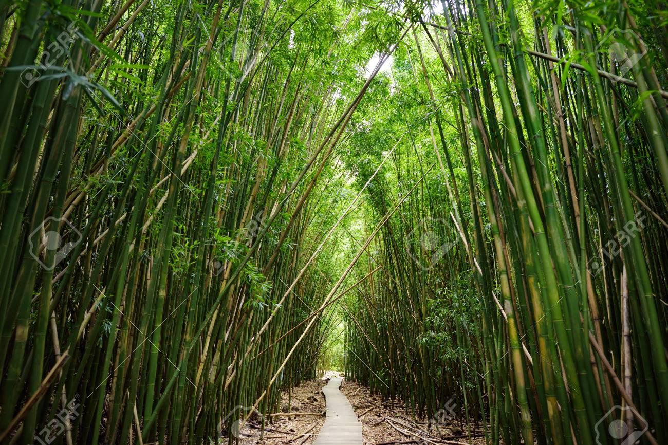 Holzerner Pfad Durch Dichten Bambuswald Der Zu Beruhmten Waimoku