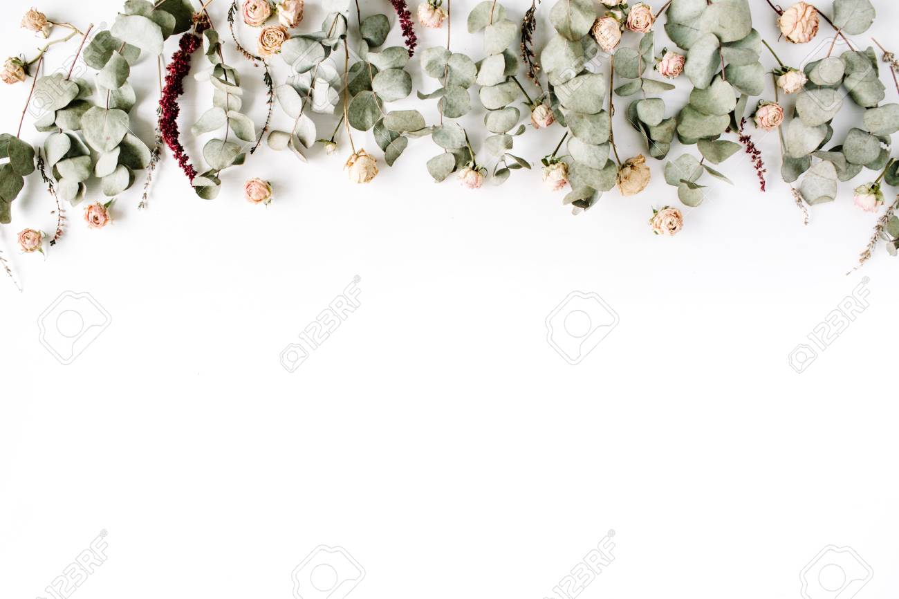 Header Eucalyptus Branches And Pink Rose Buds On White Background
