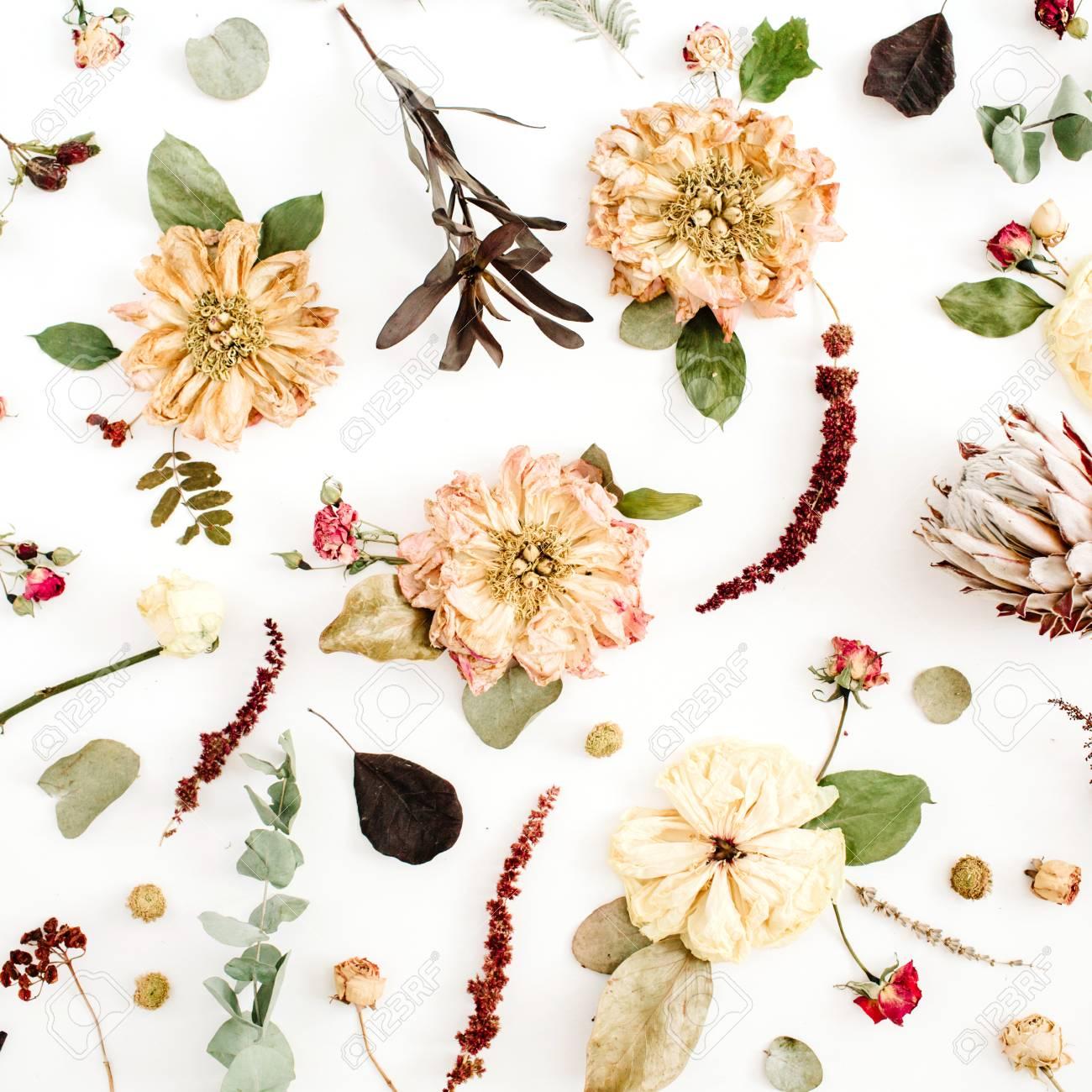 Fondo De Flores Secas: Peonía Beige, Protea, Ramas De Eucalipto ...