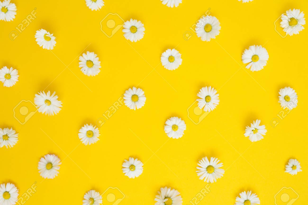 Floral Pattern Of White Chamomile Daisy Flowers On Yellow Background