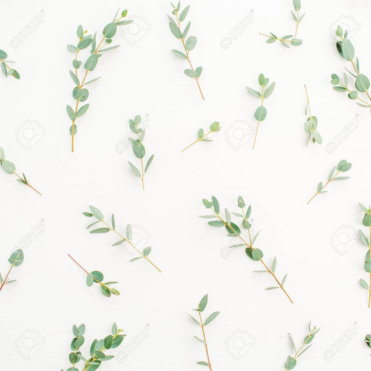 96819464 eucalyptus branch pattern on white background flat lay top view