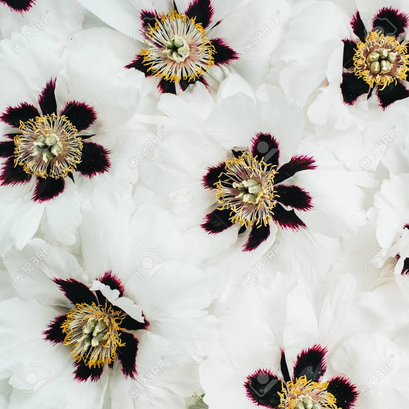 White Peonies Flowers Texture Flat Lay Top View Fotos Retratos