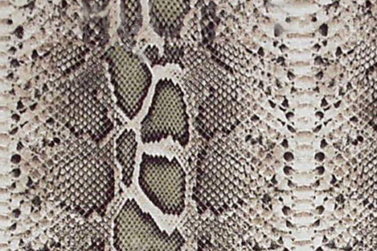 Snake Skin - 24680887