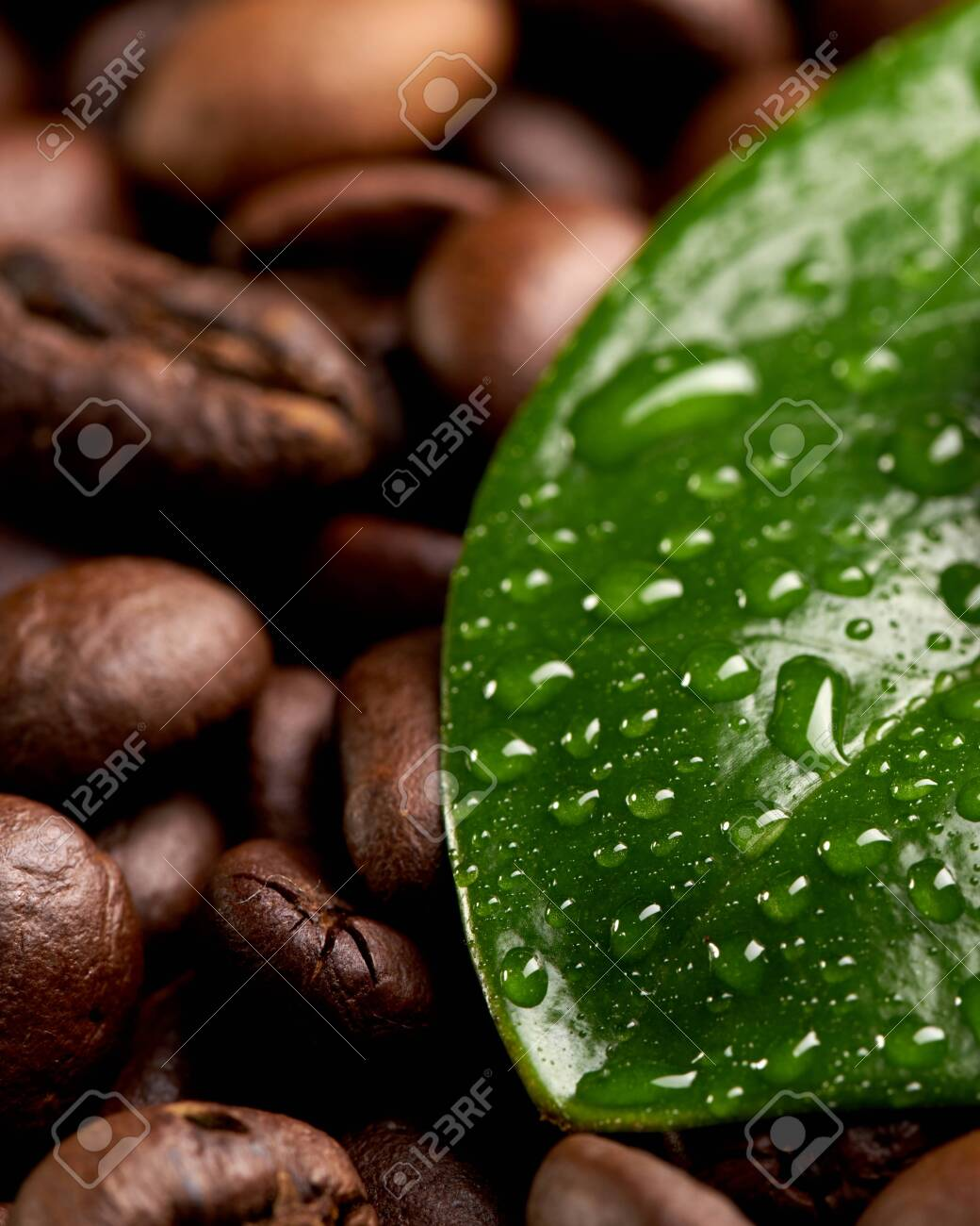 Green Leaf With Water Drops Lying On The Background Of Coffee