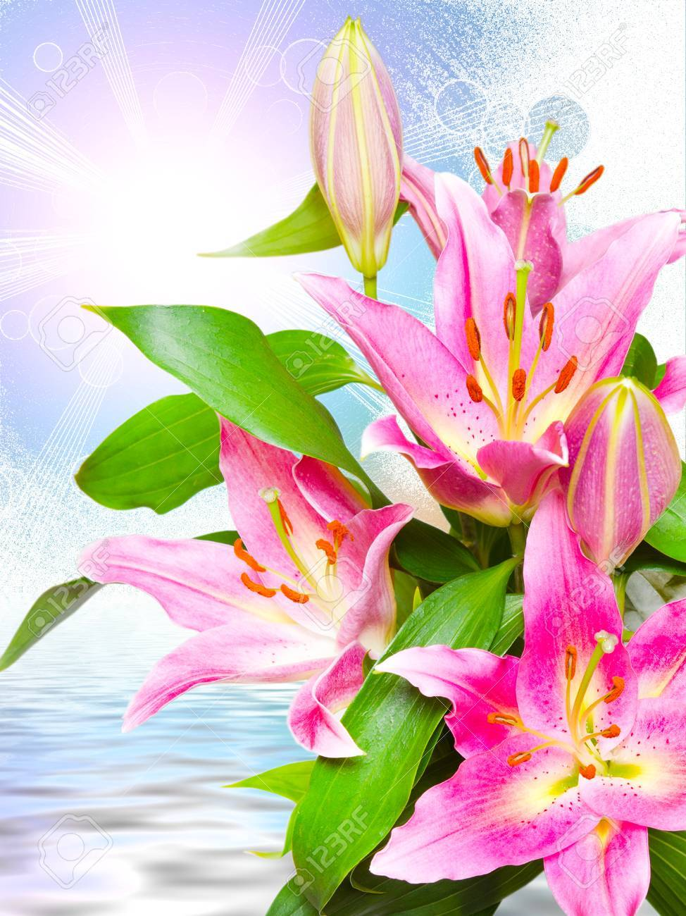 Close up of beautiful pink lilies flowers stock photo picture and close up of beautiful pink lilies flowers stock photo 57613375 izmirmasajfo