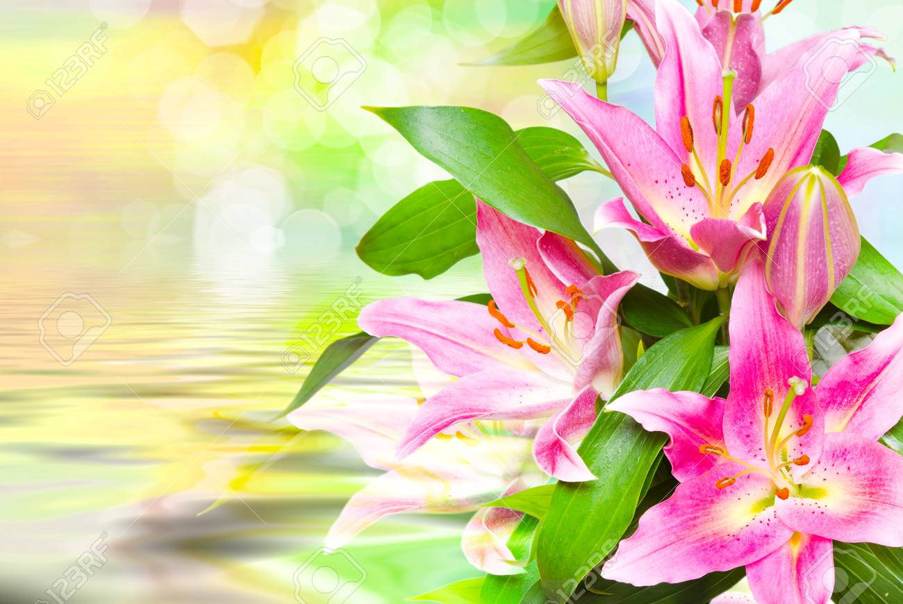 Close Up Of Beautiful Pink Lilies Flowers Stock Photo Picture And