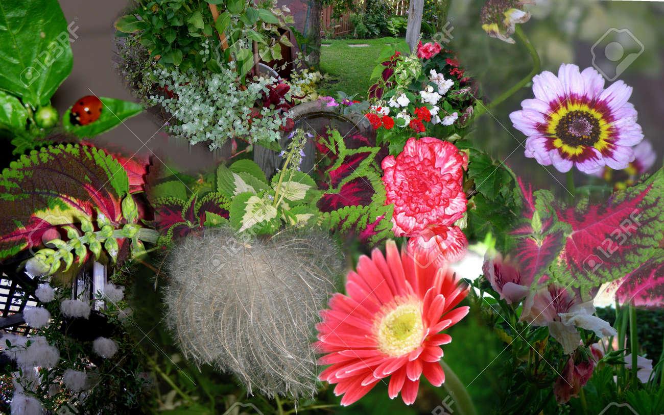 Floricoltura il mio giardino u betvipwin club