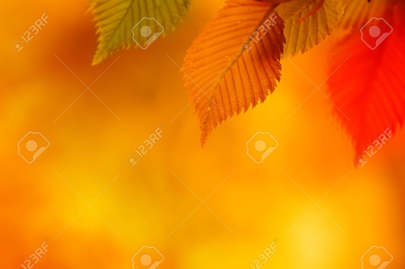 Colorful Autumn Leaves Autumn Background - 15757219