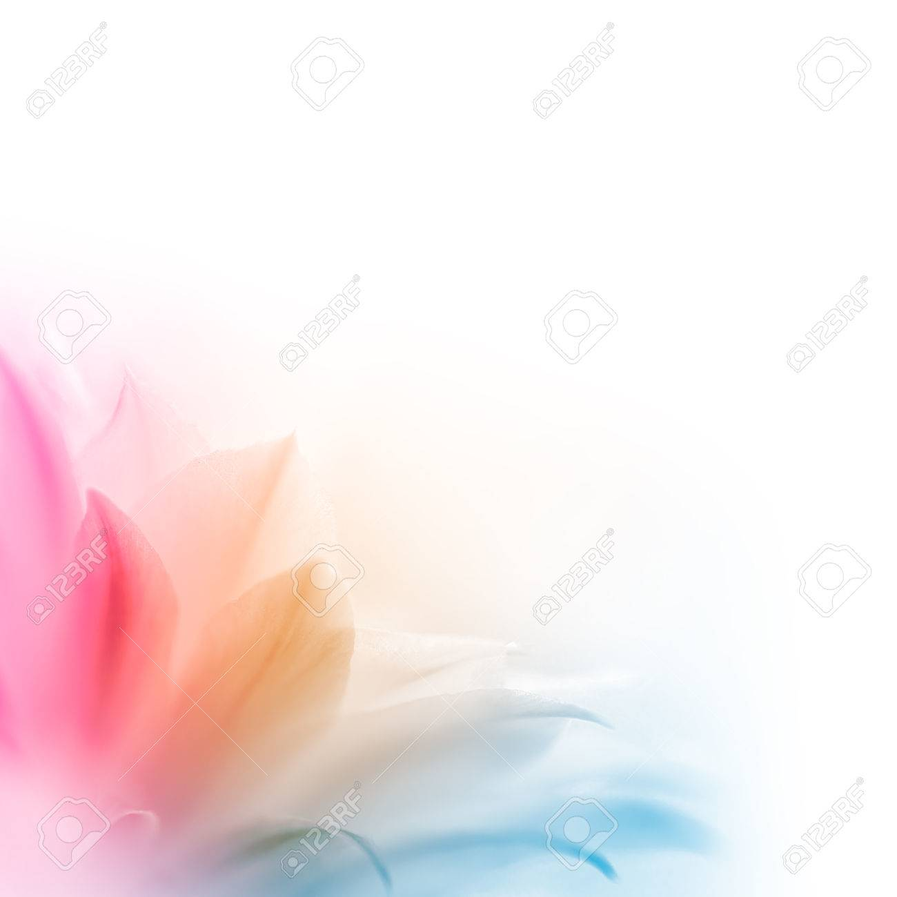 Bright Multicolored Cactus Flower on the White Background. Abstract Design - 33252854