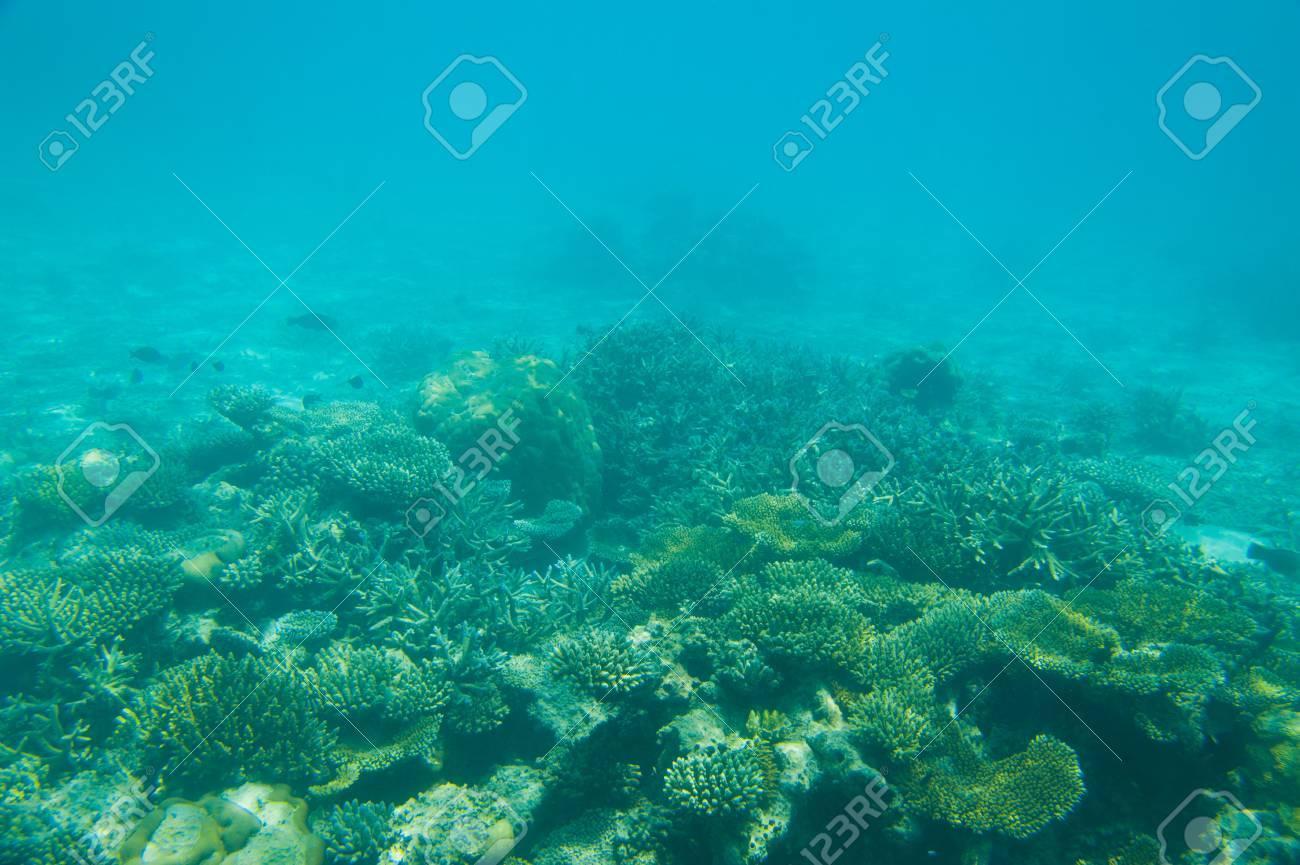 Beautiful Coral reef underwater shot, Maldives island - 32406156