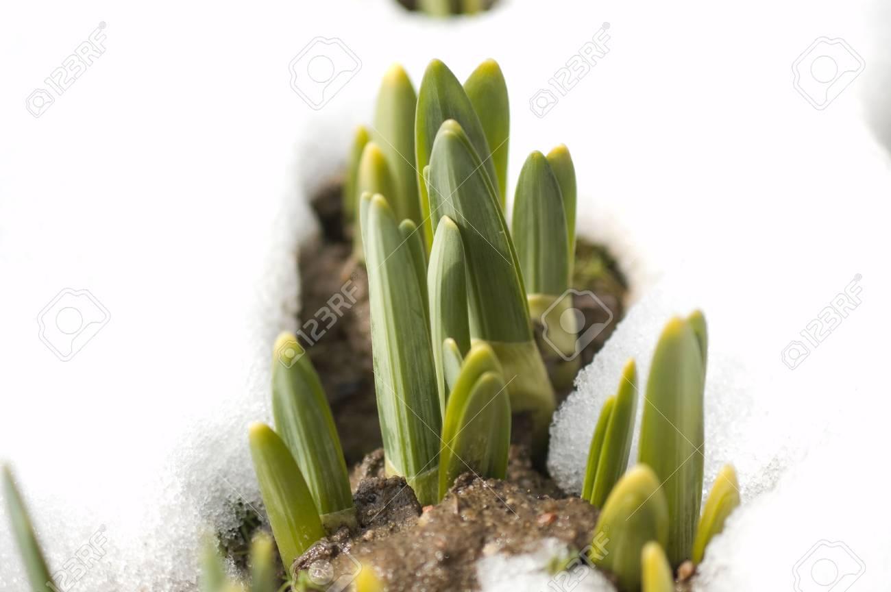 spring shoots Stock Photo - 2767385