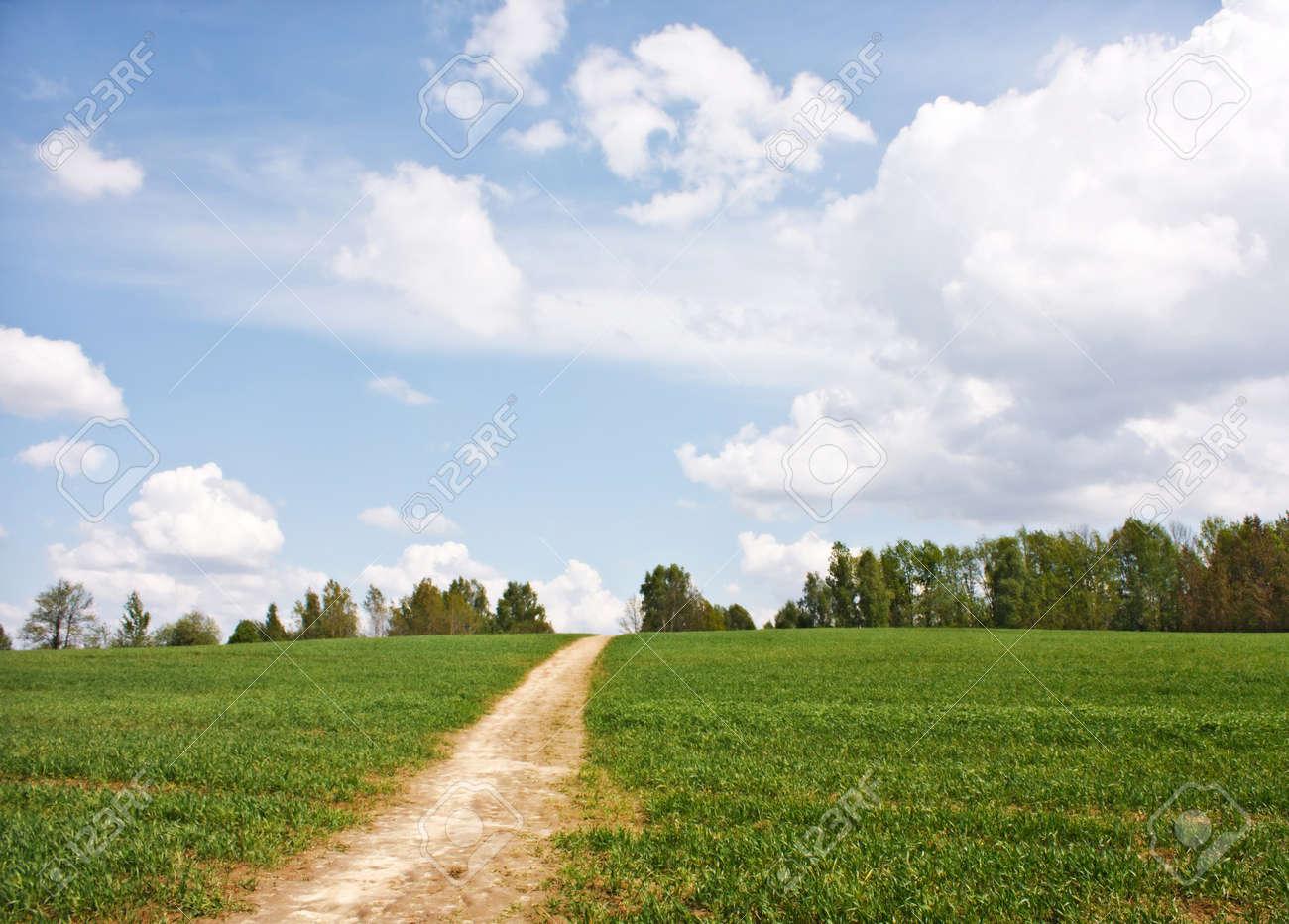 field of grass Stock Photo - 7127149
