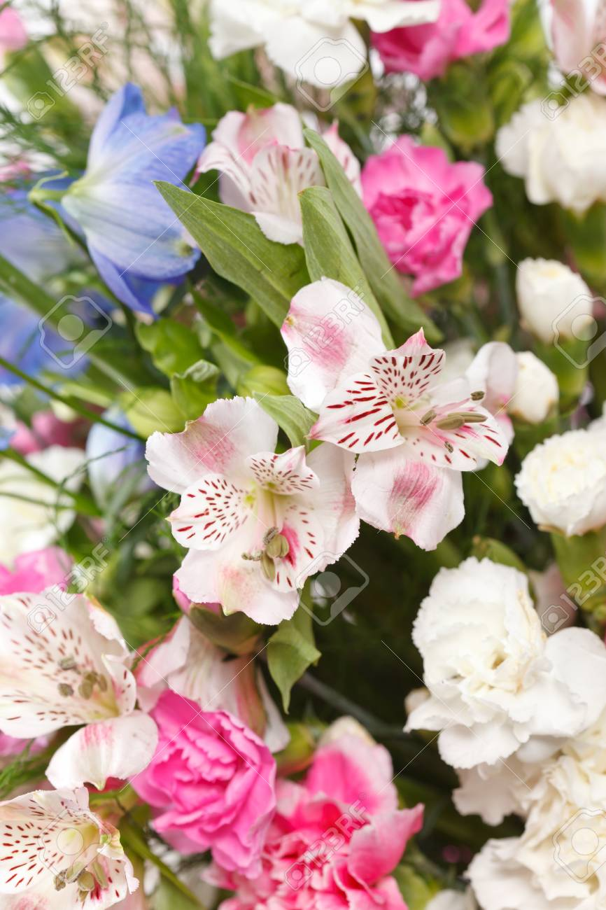 bouquet of colorful flowers Stock Photo - 10560403