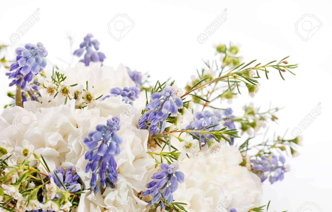 spring flowers Stock Photo - 17173993