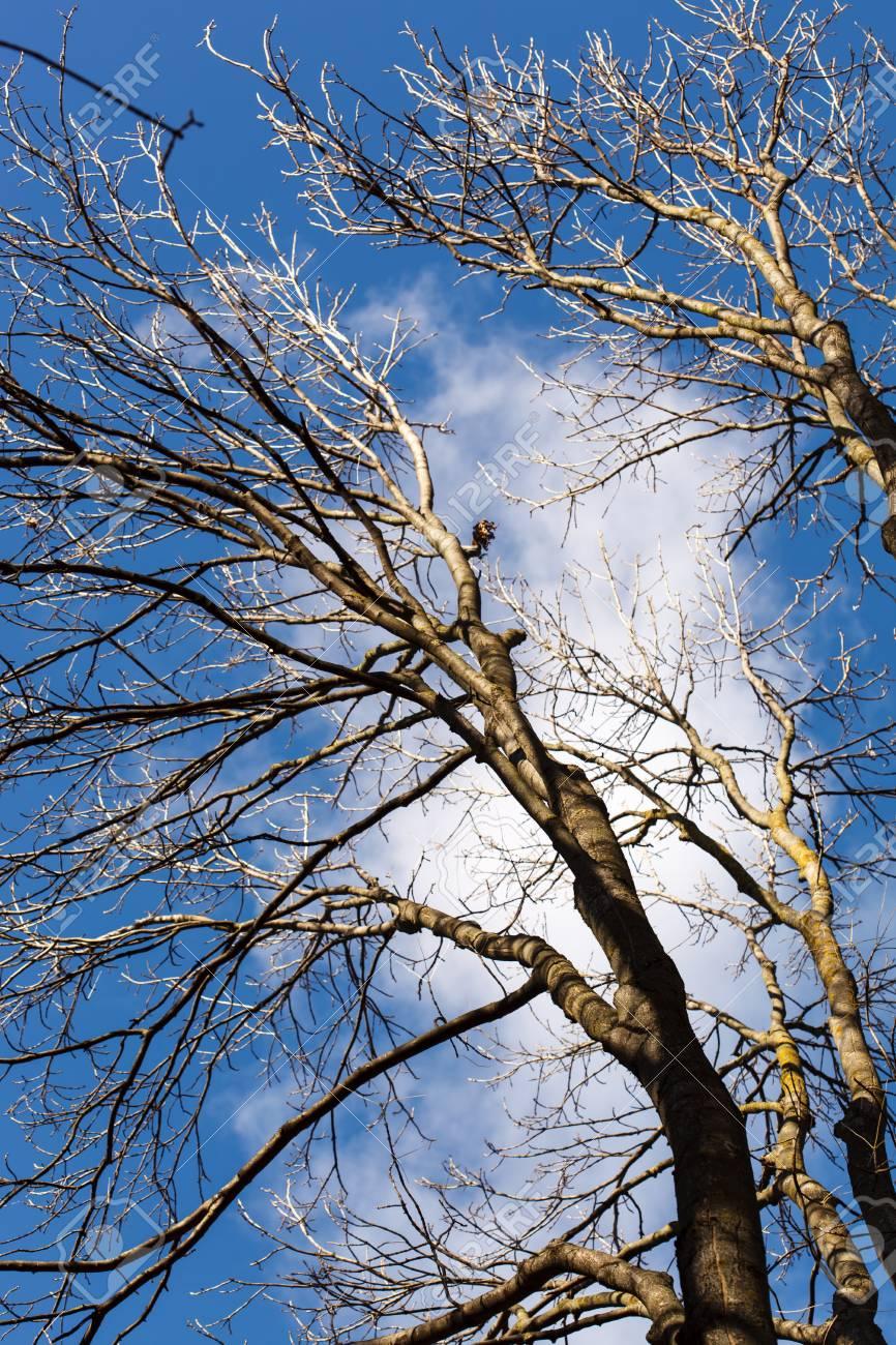 autumn trees Stock Photo - 23142814