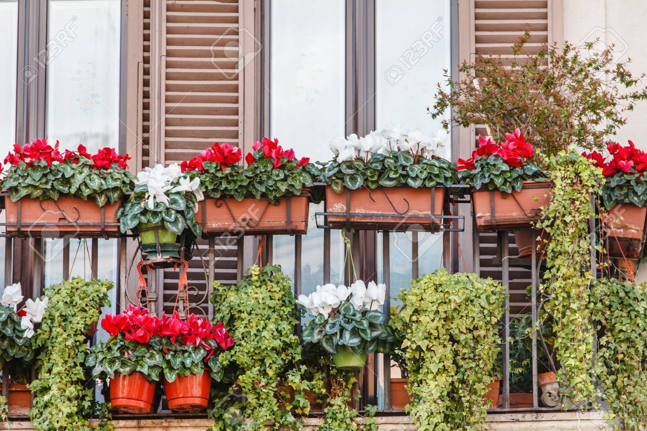 flowers on the balcony stock photo picture and royalty free image