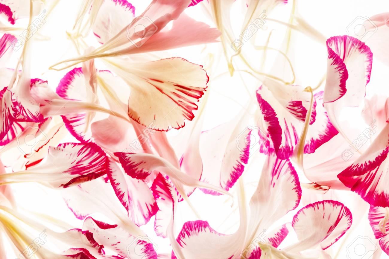flower petals - 128518854