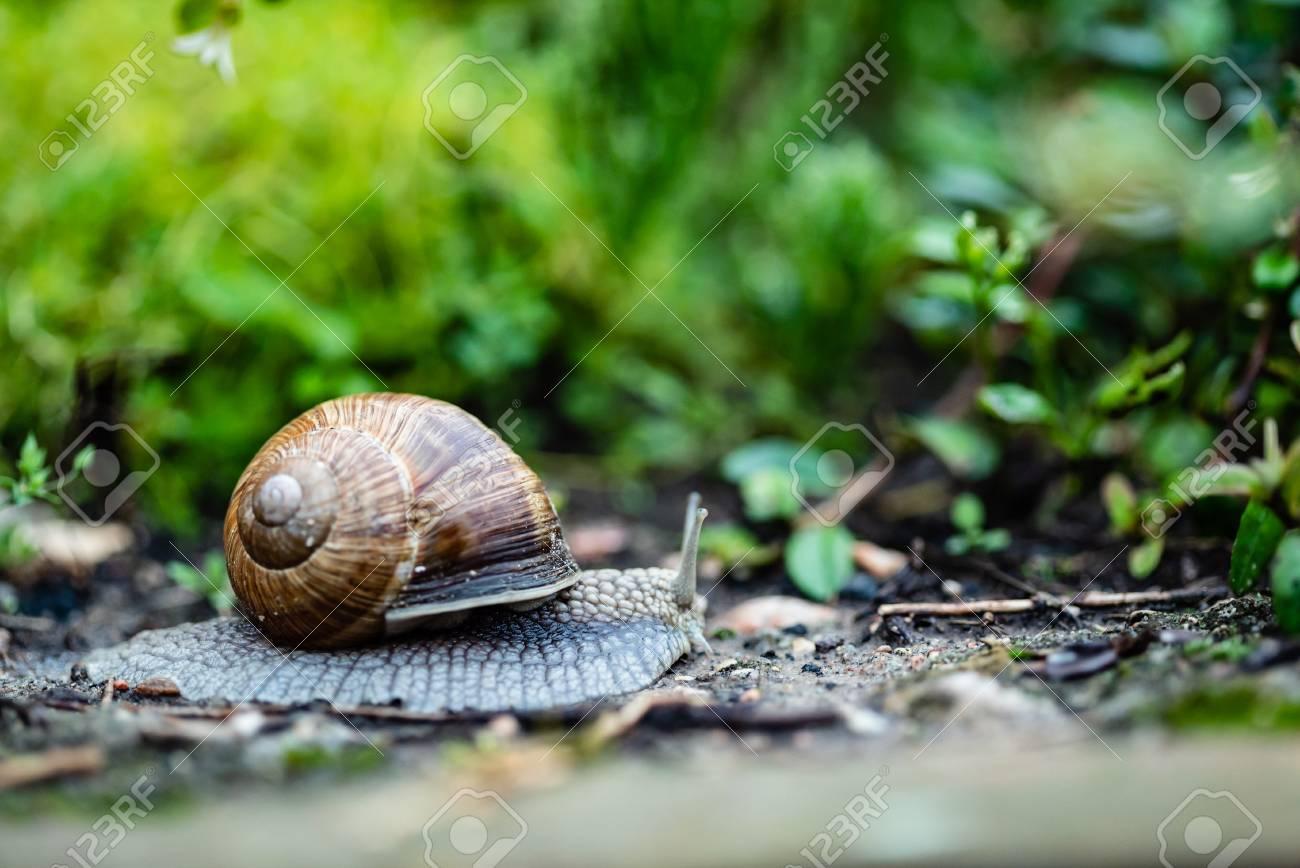 snail in the garden - 107188546