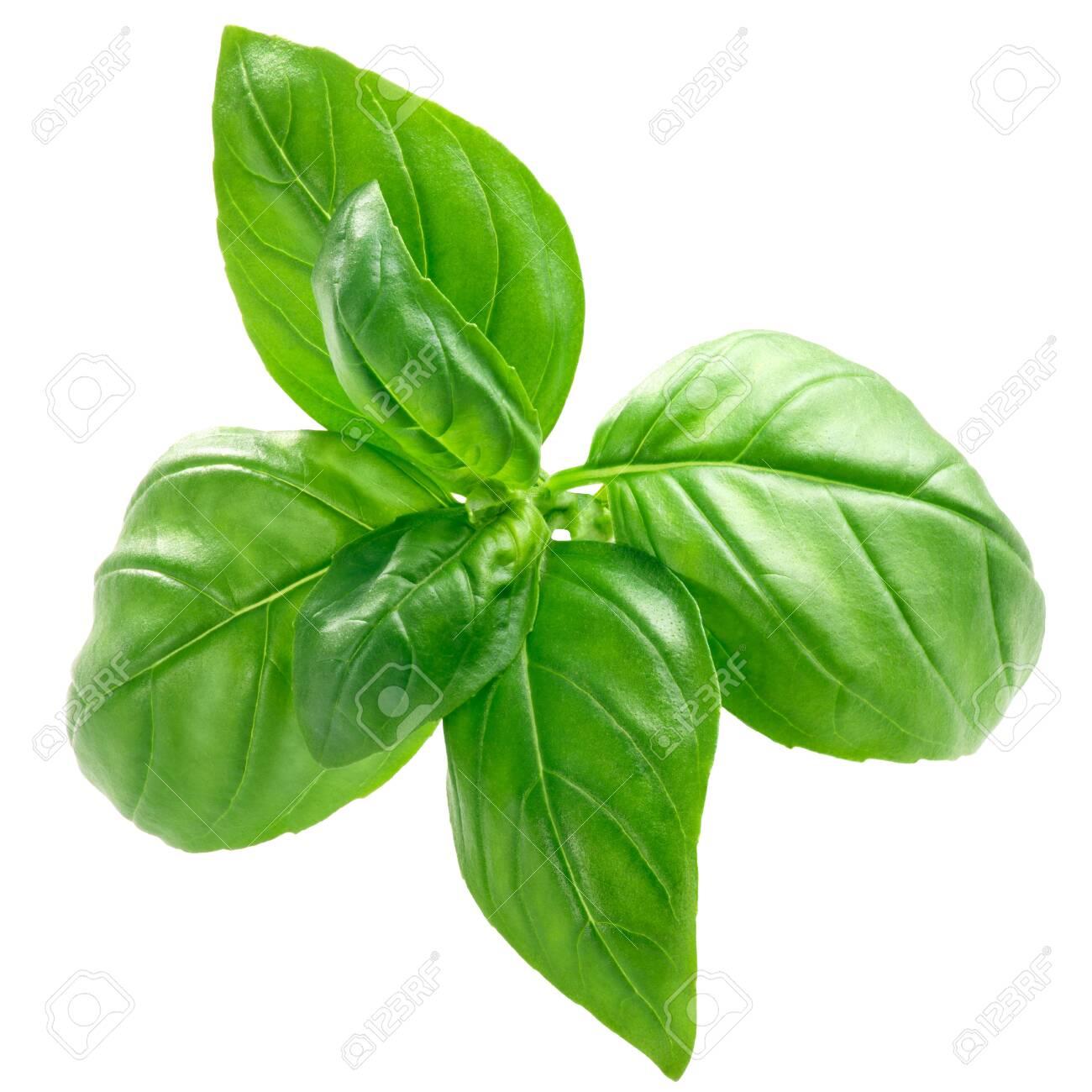 Basil leaves (Ocimum basilicum), bulgy, isolated, top view - 130407470