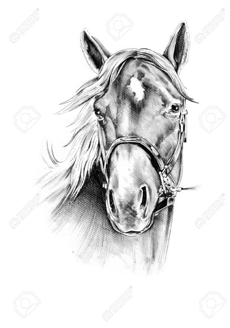 Horse head pencil drawing stock photo 32343957