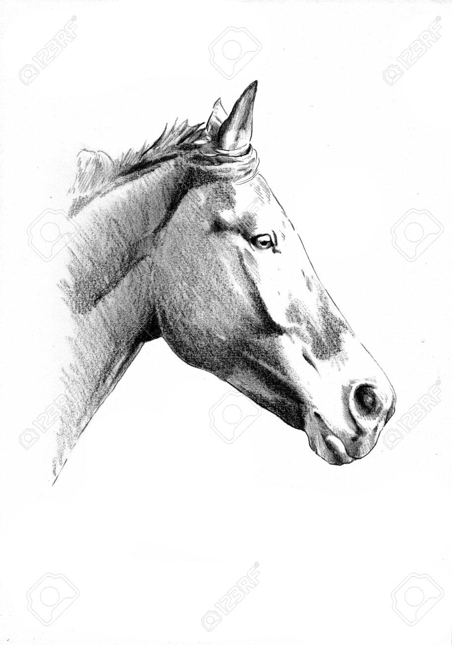 Freehand horse head pencil drawing stock photo 82668458