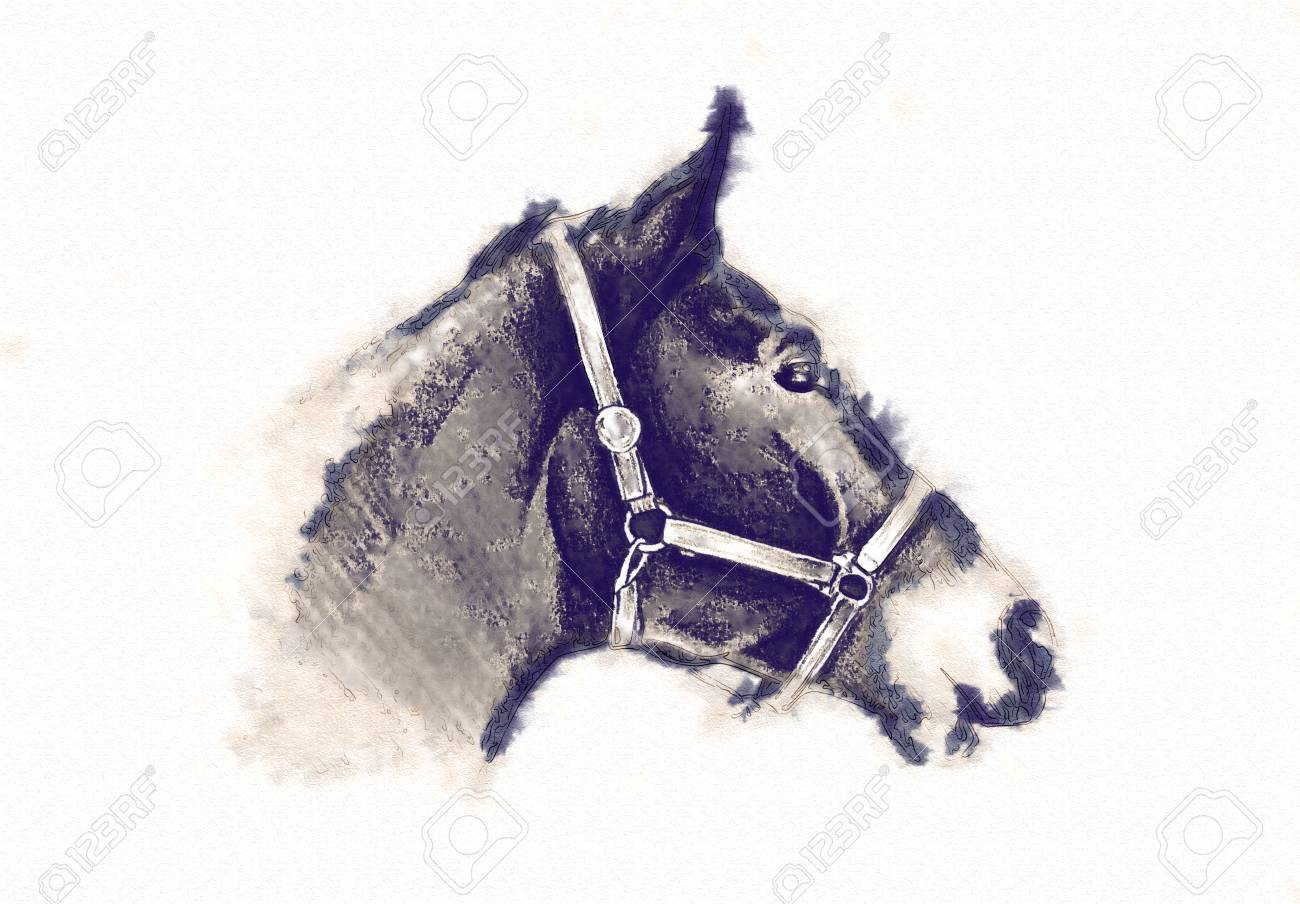 Freehand Horse Head Pencil Drawing Stock Photo Picture And Royalty Free Image Image 86870077