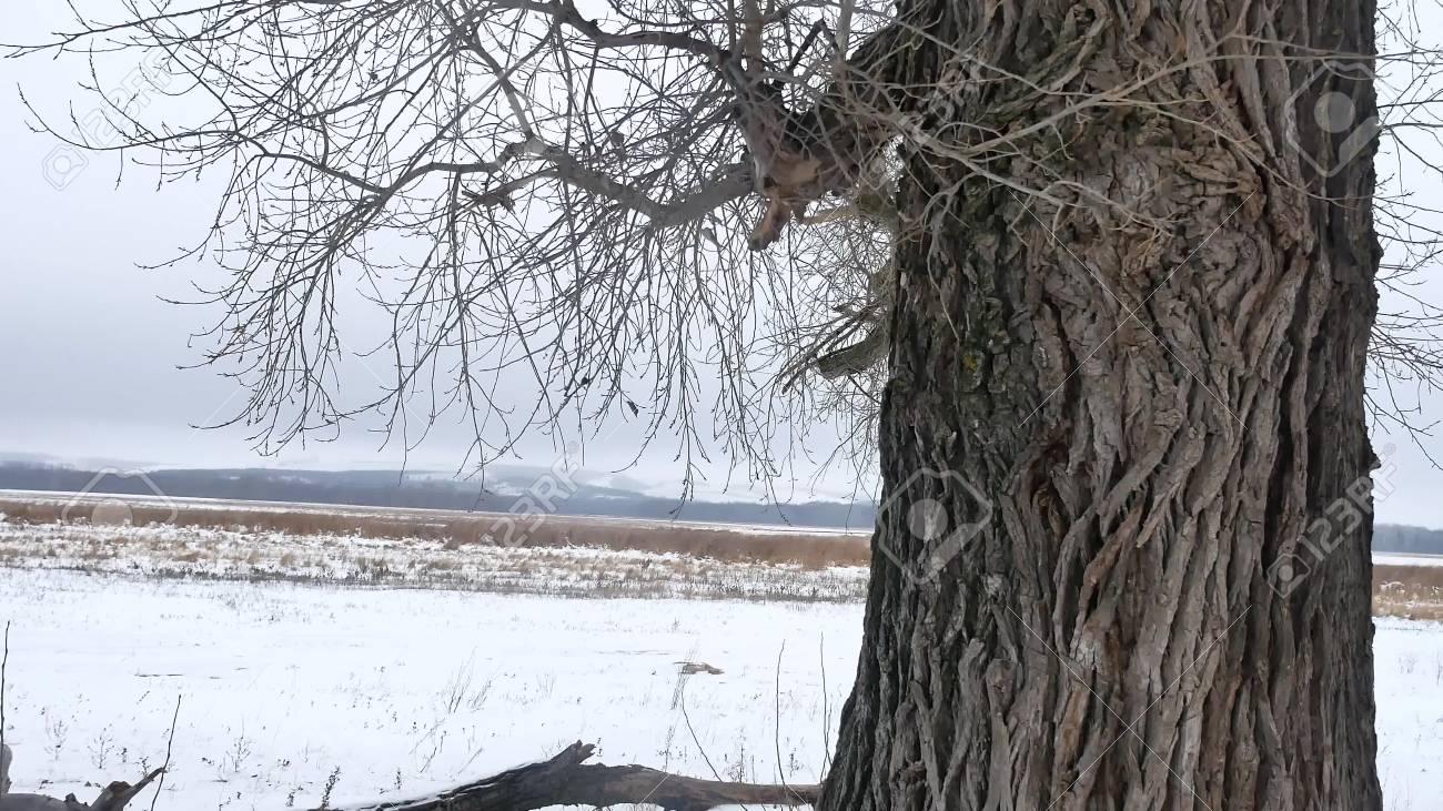hermosas fotos de invierno naturaleza Secar La Hierba Pantano Invierno Caa Hermosa Naturaleza Fro Paisaje