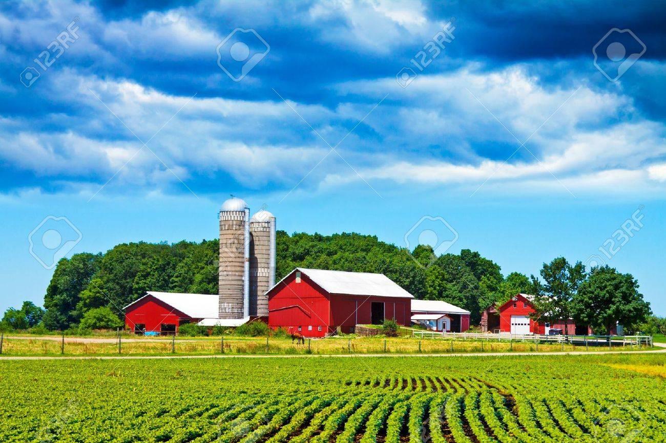 Farm - 10985134