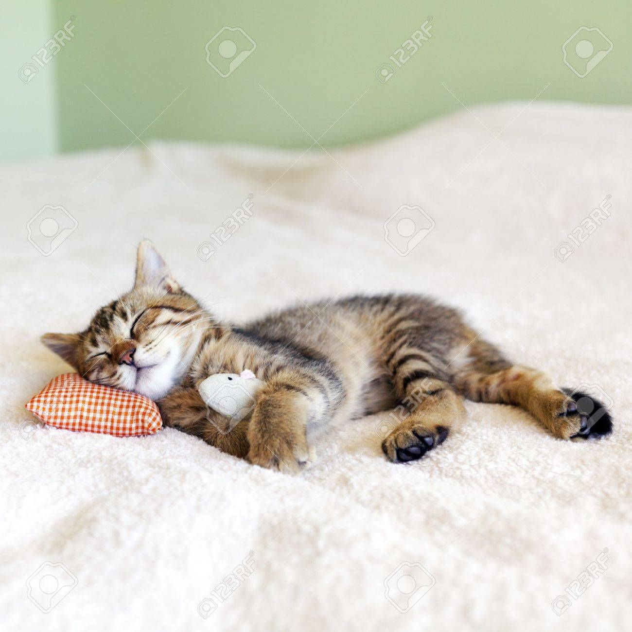 Small Kitty With Red Pillow and Mouse Stock Photo - 17472999