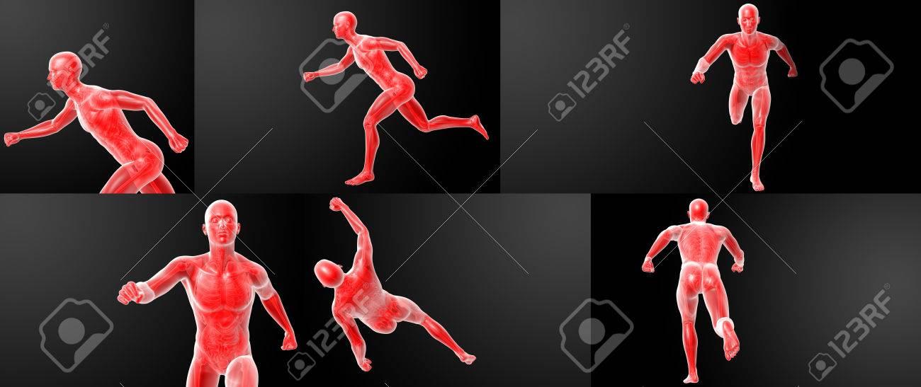 Ejecución De La Anatomía Humana Por Los Rayos X En Rojo Fotos ...