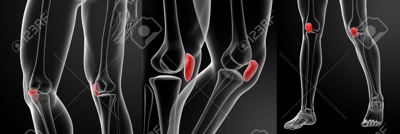 3d Rendering Illustration Of The Patella Bone Stock Photo, Picture ...