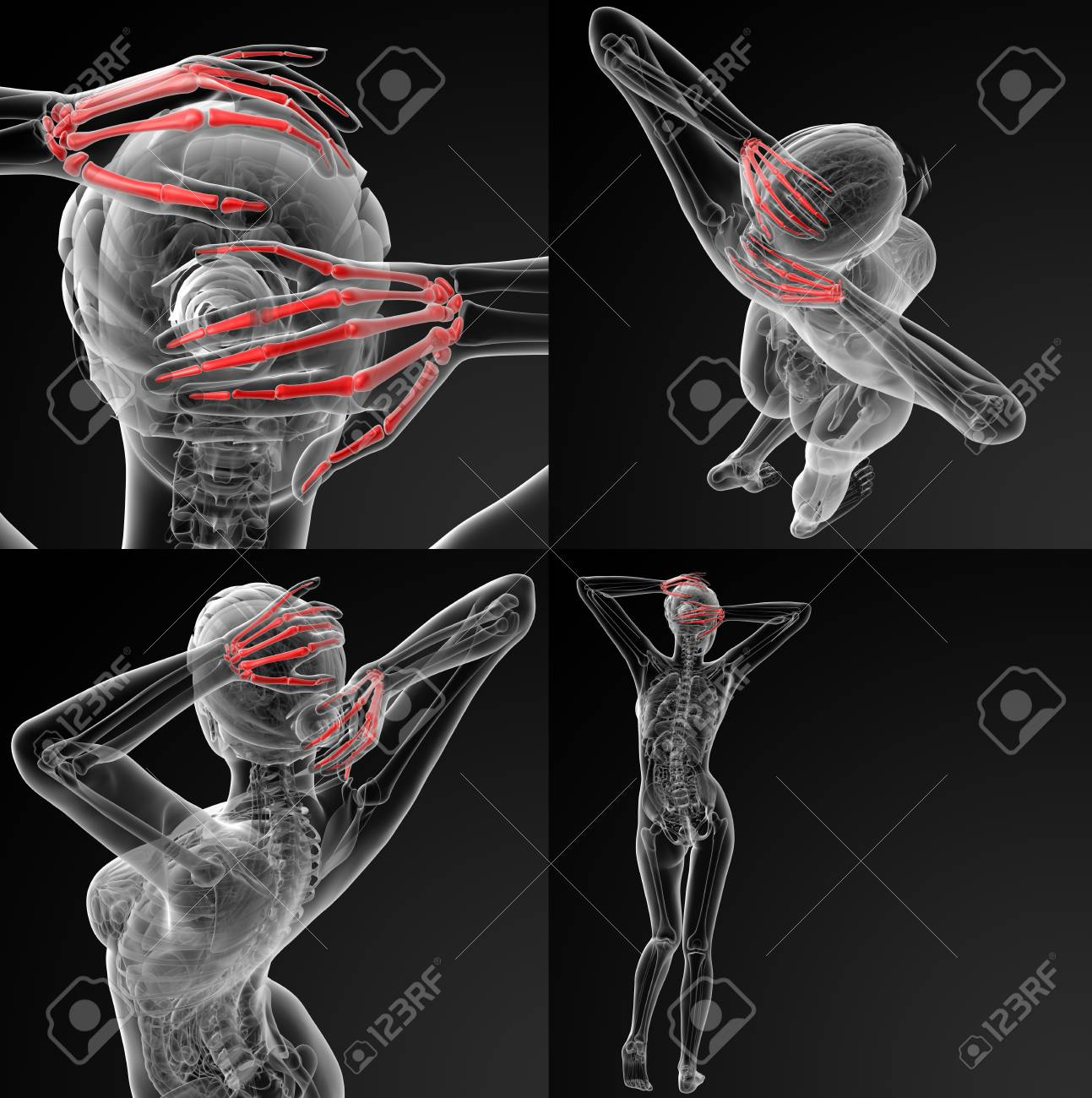 3d Rendering Illustration Of The Skeletal Hand Stock Photo Picture