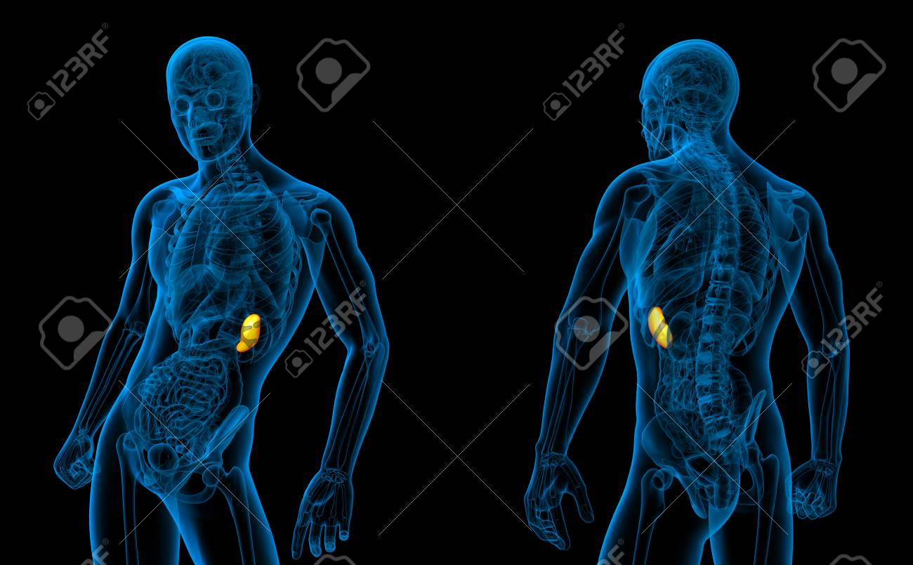 3d Rendering Medical Illustration Of The Spleen Stock Photo Picture