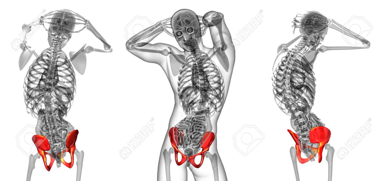 3d Rendering Medical Illustration Of The Pelvis Bone Stock Photo