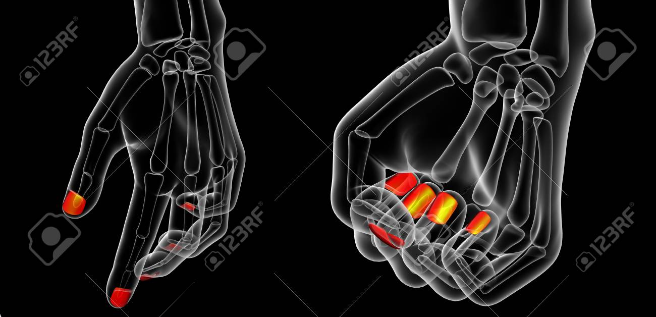 3d Rendering Illustration Of Nail Anatomy Stock Photo, Picture And ...