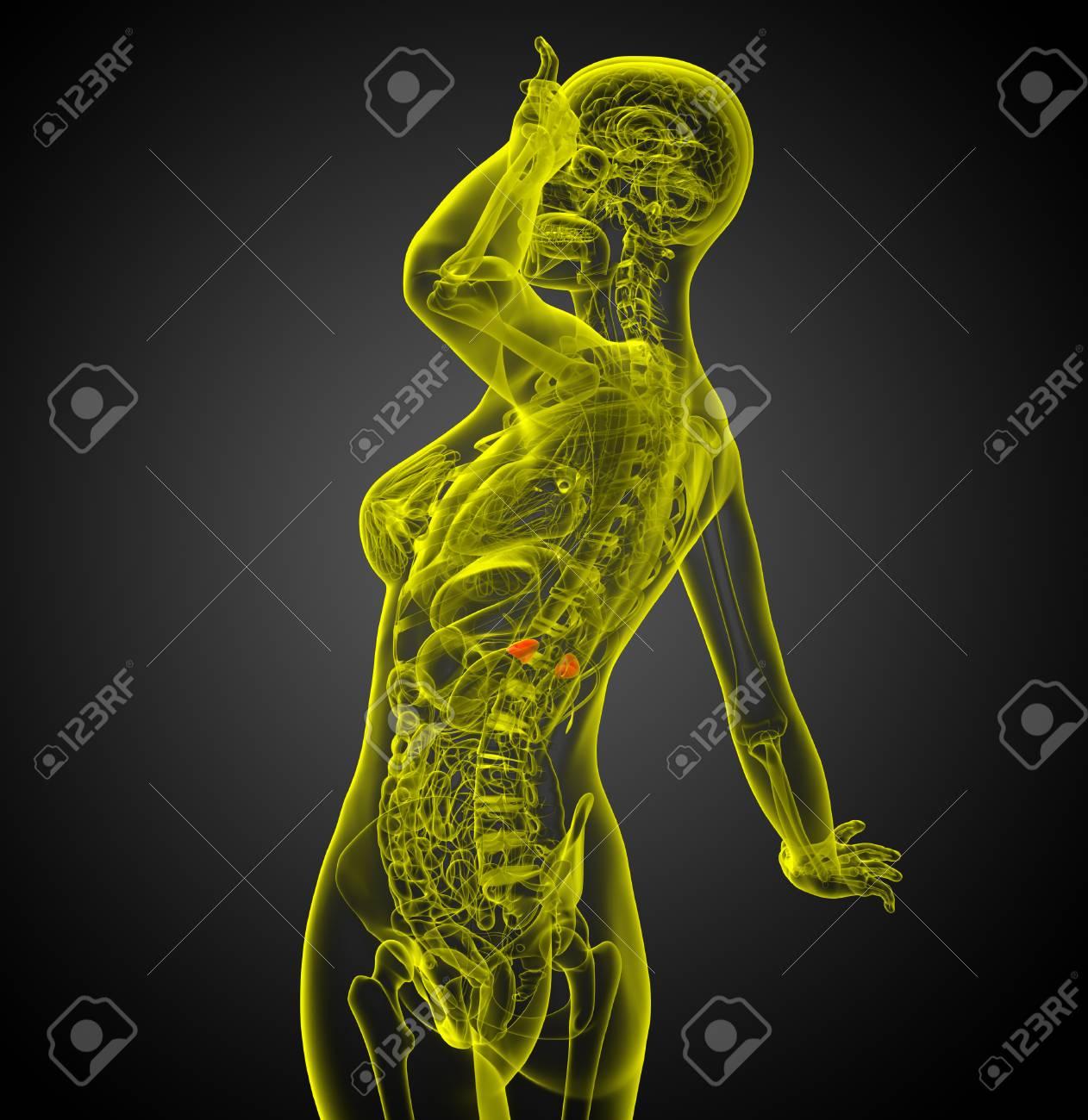 3d Render Medical Illustration Of The Spleen Side View Lizenzfreie