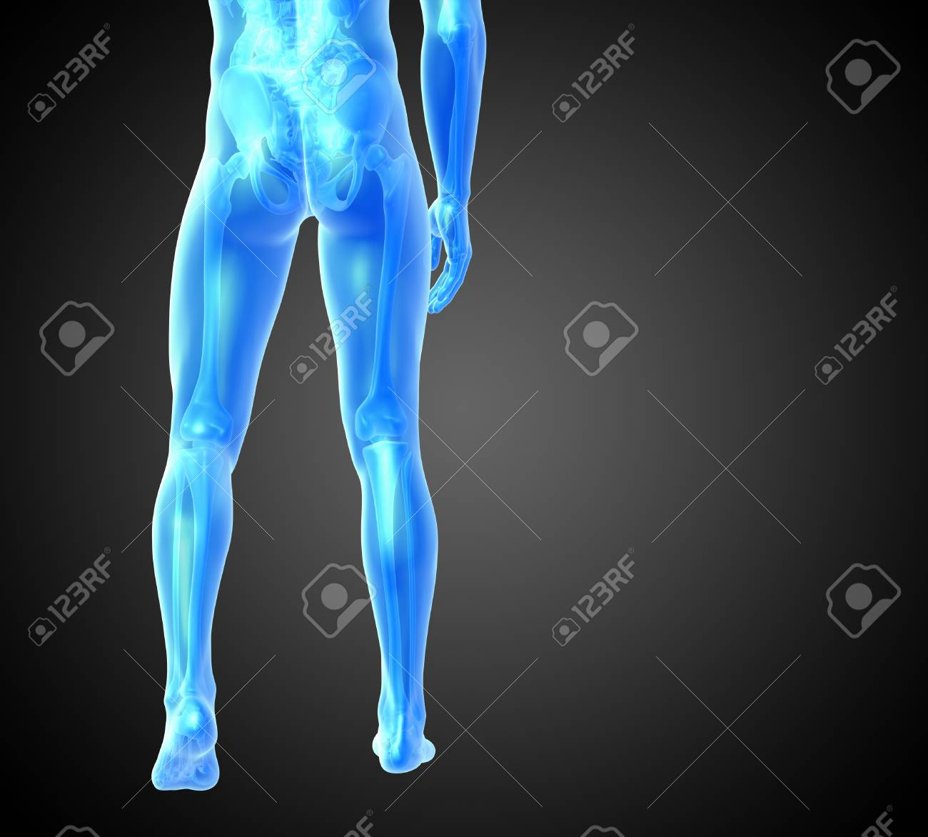 3d Render Medical Illustration Of The Human Anatomy Back View