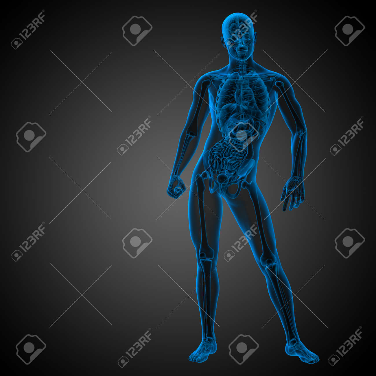 3d render medical illustration of the human anatomy - front view - 169098447