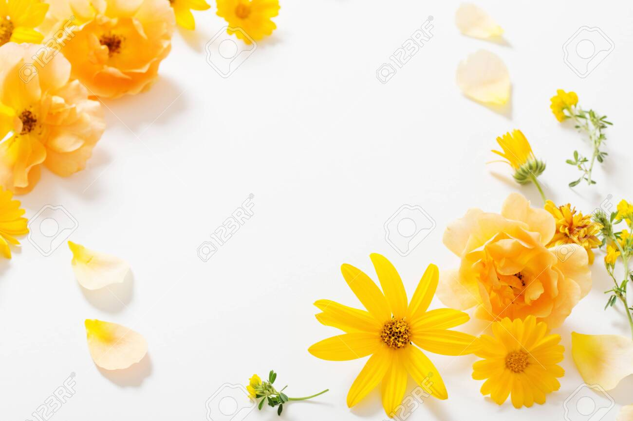 the yellow flowers on white background - 122613470