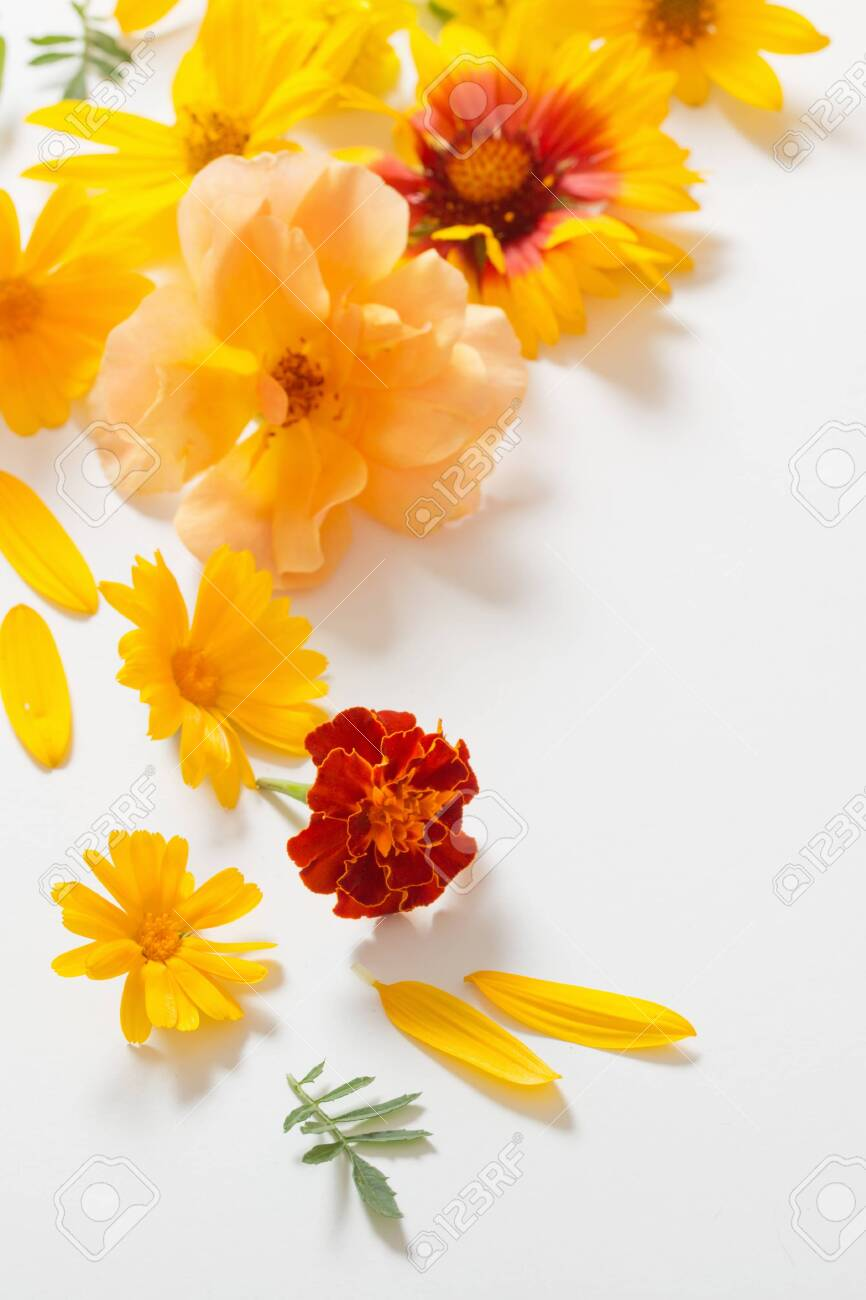 the yellow and orange flowers on white background - 129781059