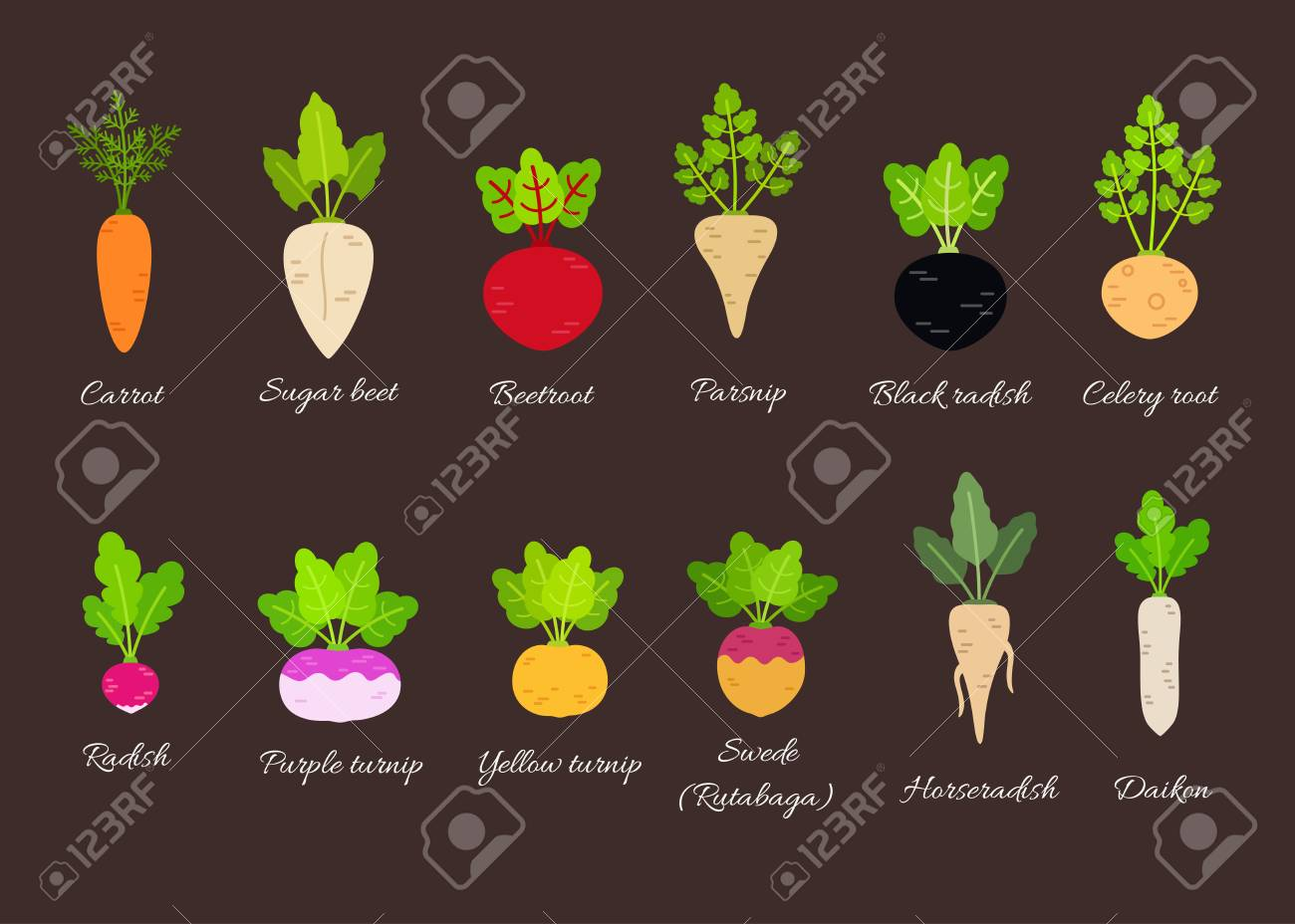 Collection Of Different Root Vegetables With Titles Vector