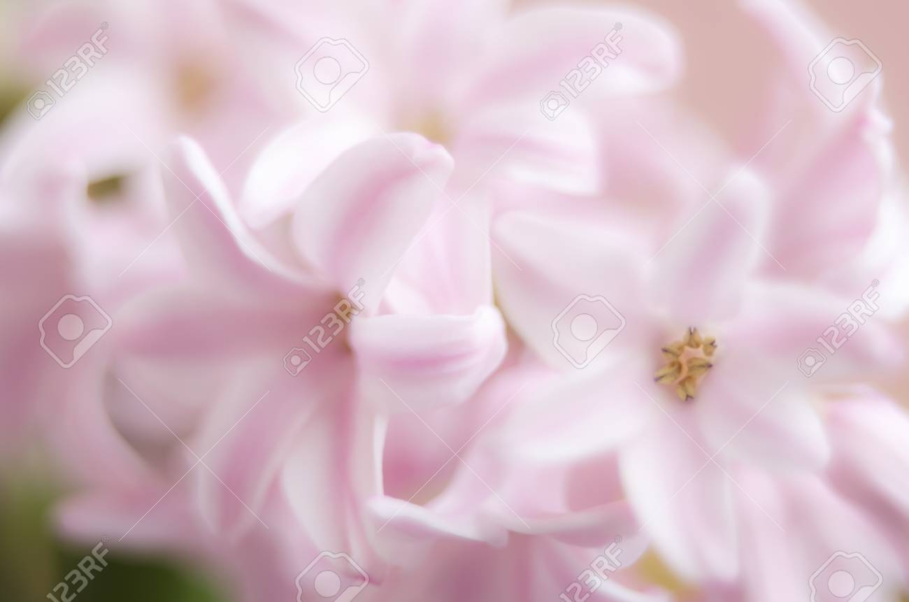Blurry Soft Pink Flowers Background Stock Photo Picture And Royalty