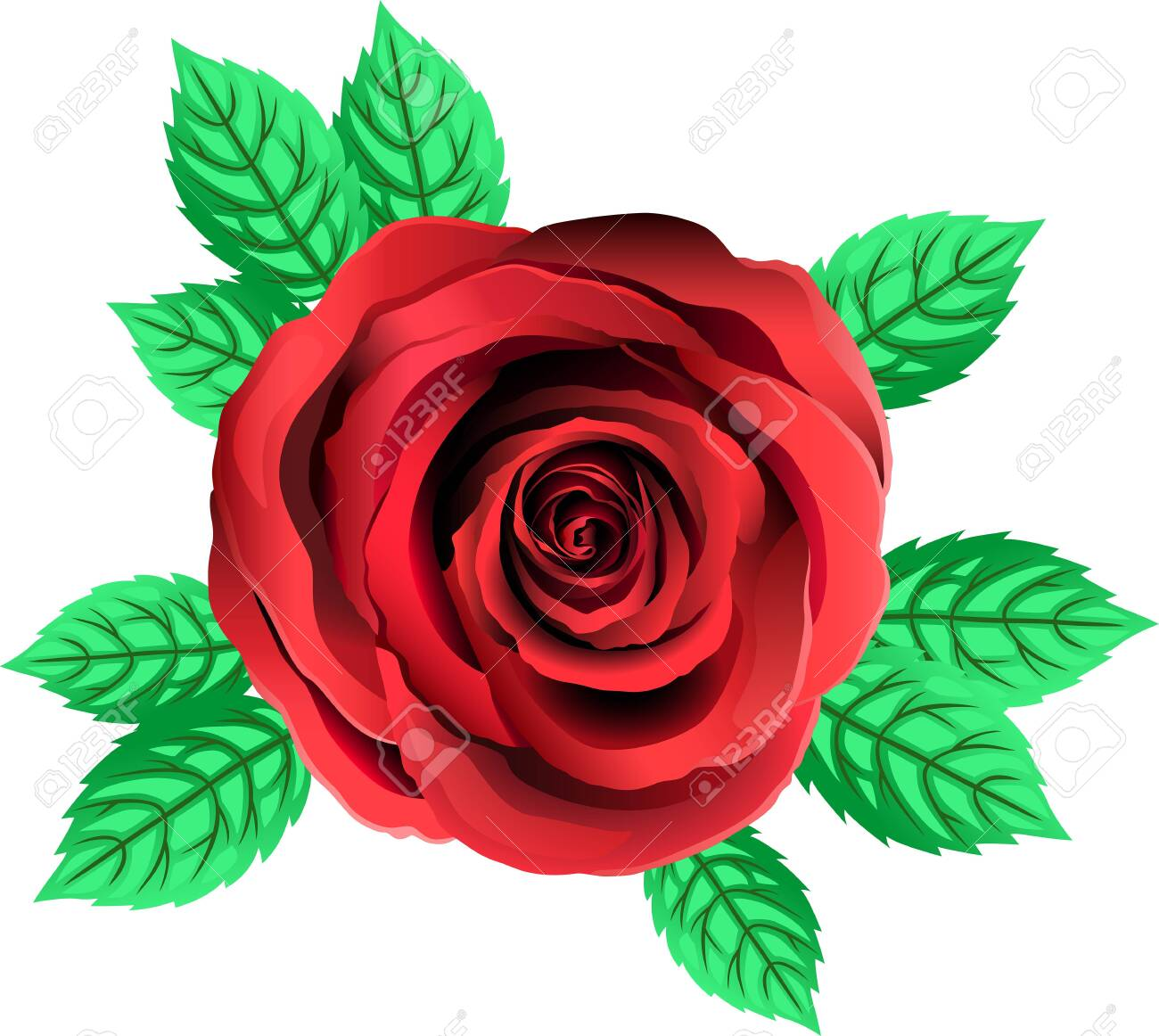 Vector Red Rose Flower Rose Clipart With Petals And Leaf