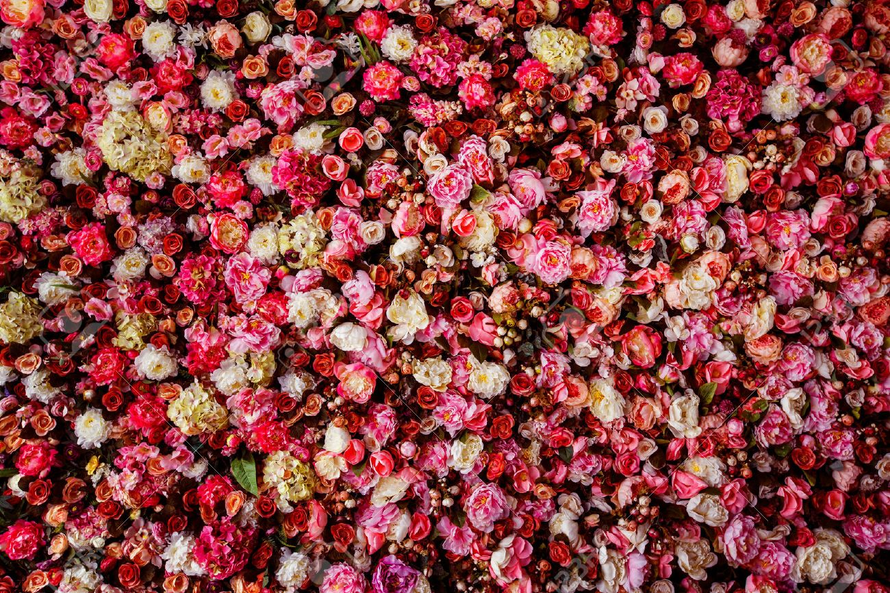 Closeup Image Of Beautiful Flowers Wall Background With Amazing Stock Photo Picture And Royalty Free Image Image 42907119