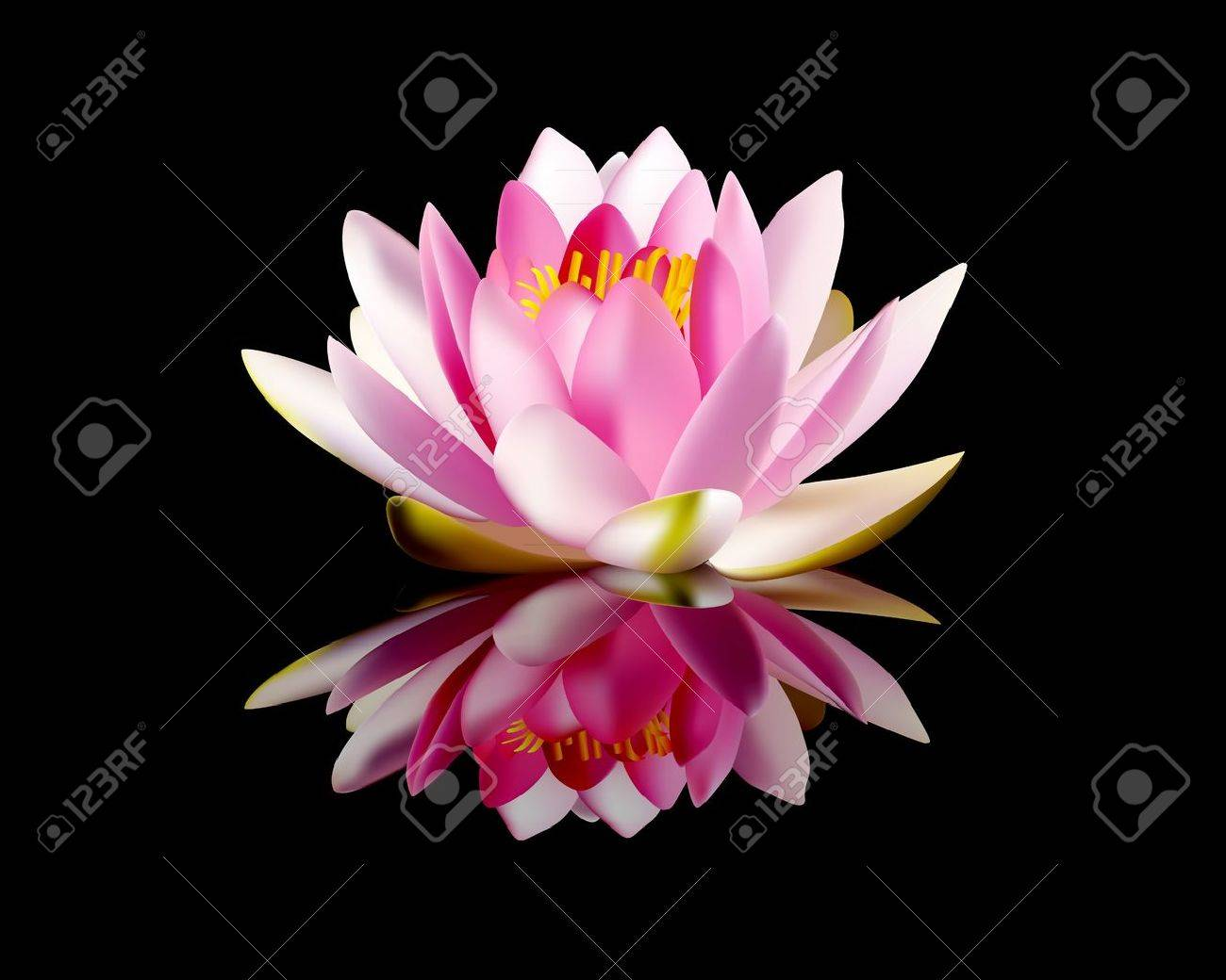 Water lily images stock pictures royalty free water lily photos water lily pink water lily on a black background dhlflorist Images