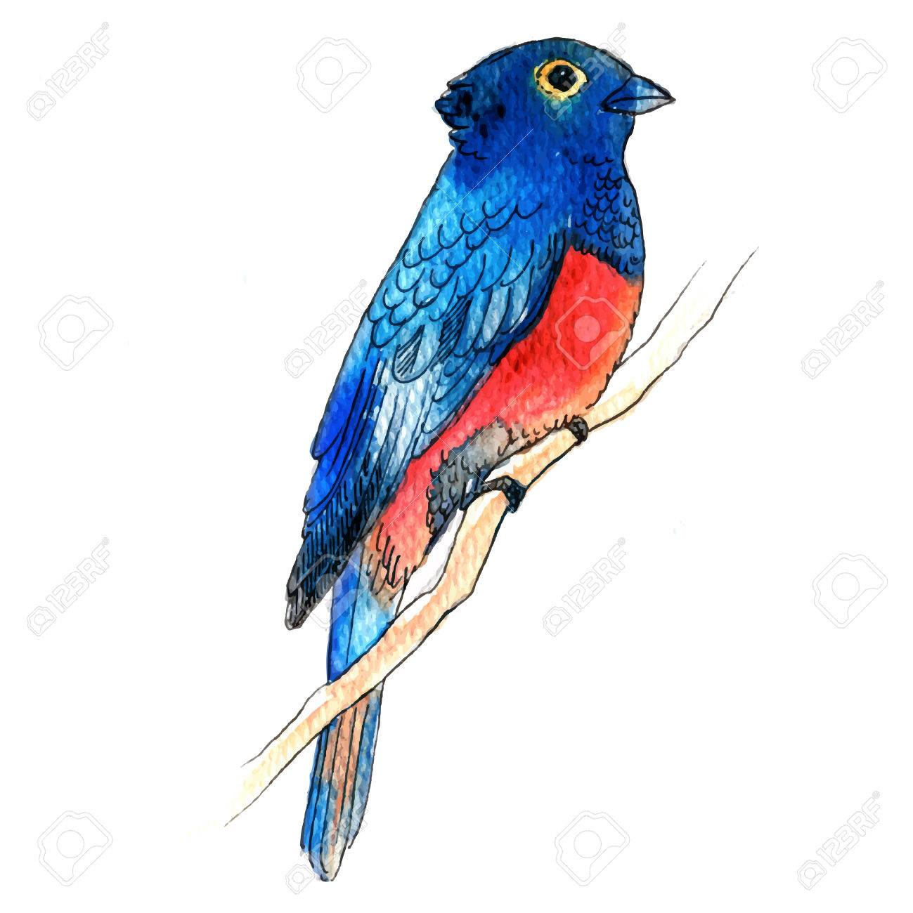 watercolor style vector illustration of pretty bird on white