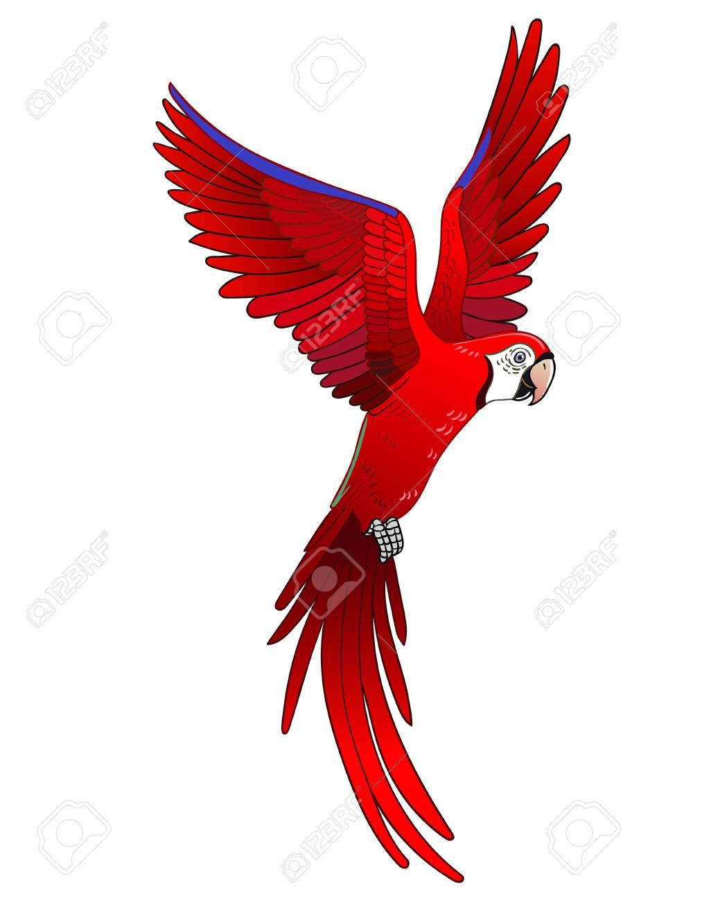 Beautiful tropical exotic parrot bird. Vector illustration. - 134649095